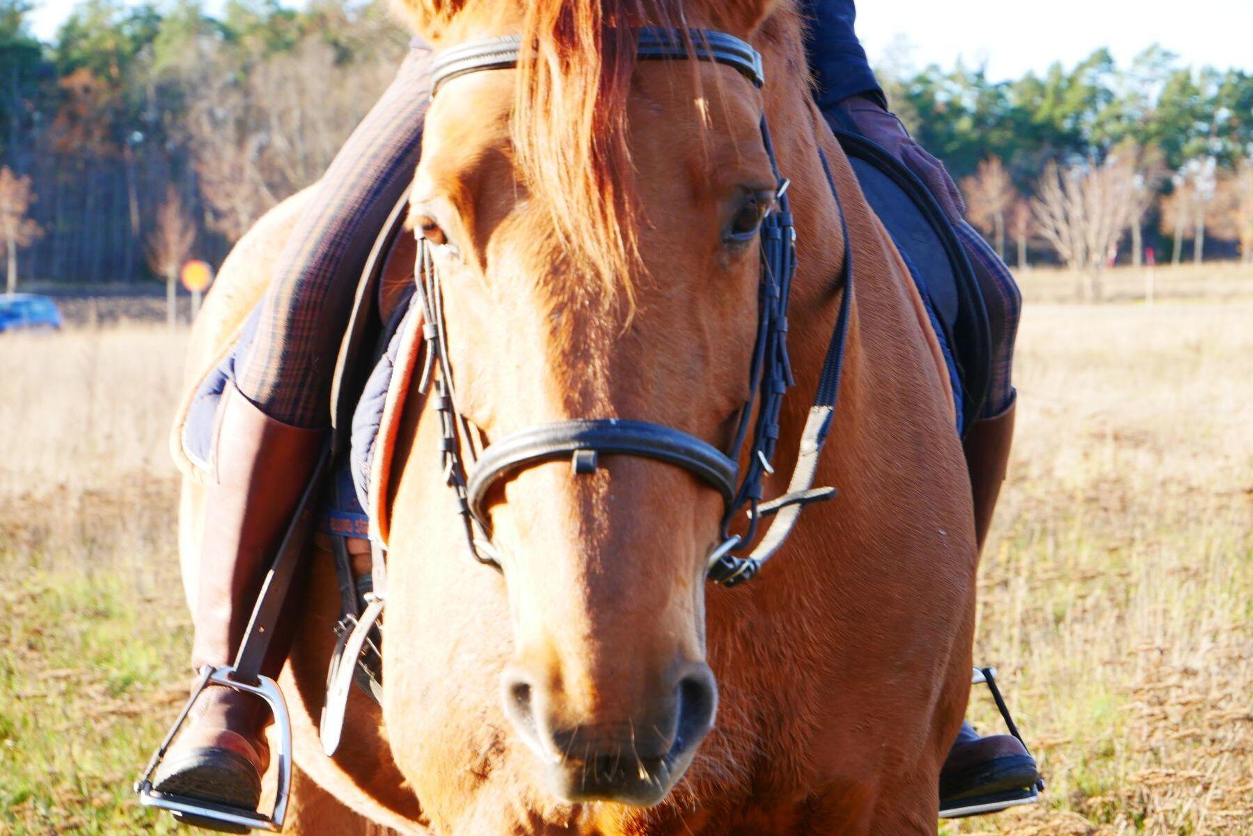 Från och med första oktober ska alla djur, även hästar, vara registrerade på den anläggning där de normalt håller till.