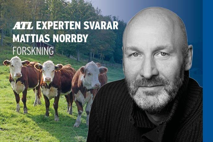 Forskare Mattias Norrby svarar.