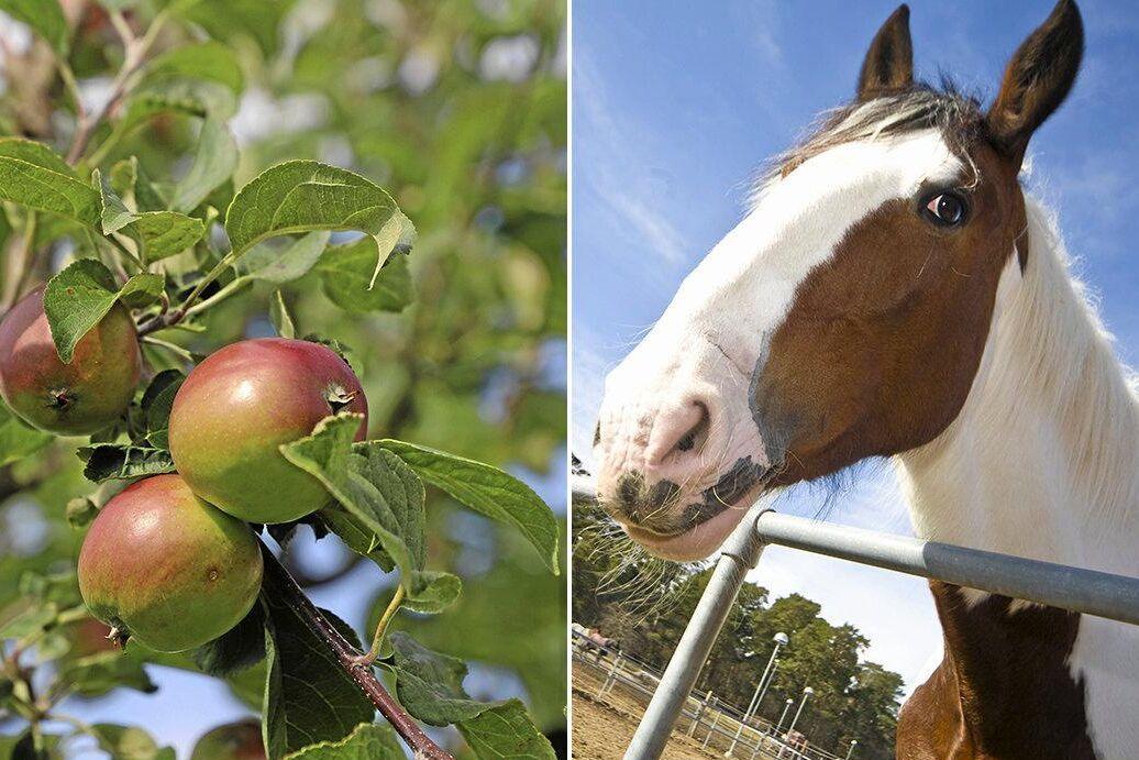 Fruktodlare och hästföretag hamnar högst på ATLs 50-lista över de mest lönsamma aktiebolagen inom de gröna näringarna.