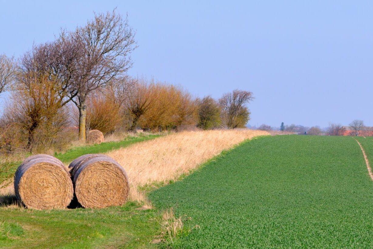 Sveriges Jordbruksarrendatorer varnar för att använda Jordbruksverkets statistik rakt av som underlag för att bestämma arrendepris i enskilda fall (arkivbild).