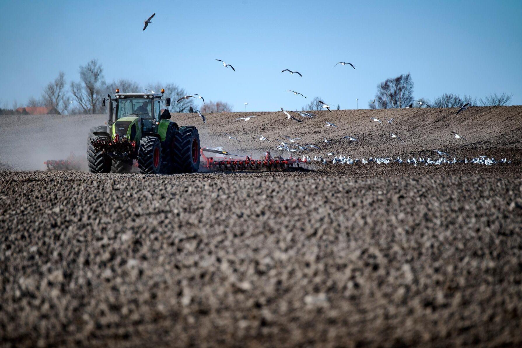 Mer klirr i kassan får tillfrågade lantbrukare att vilja fixa underhåll av maskiner och byggnader, investera i verksamheten eller nyanställa.