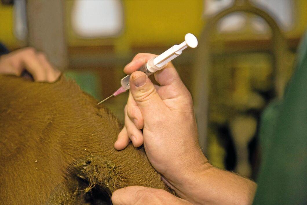I uppdraget ingår bland annat att bedöma vilka djurläkemedel som bör lagerhållas (arkivbild).
