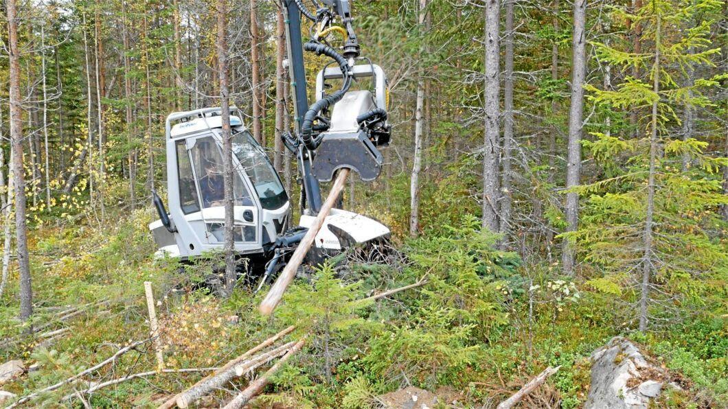 Samtidigt har flera skogsägare med torra marker och bra bärighet ansökt om dispens hos Skogsstyrelsen.