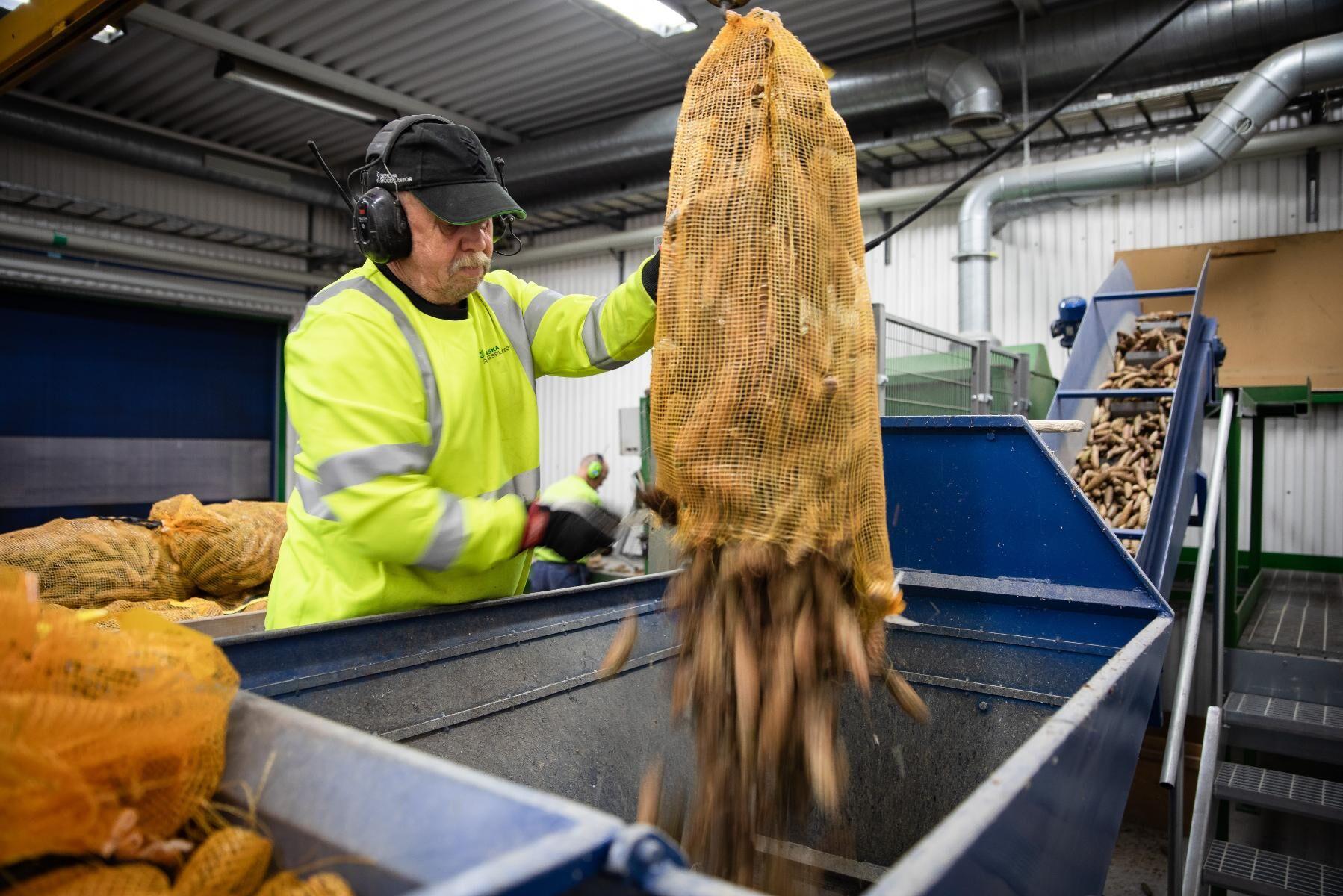 Viktor Khrulov öppnar säckar med grankottar från Öland och häller ner de i maskinen där den första rensningen sker.