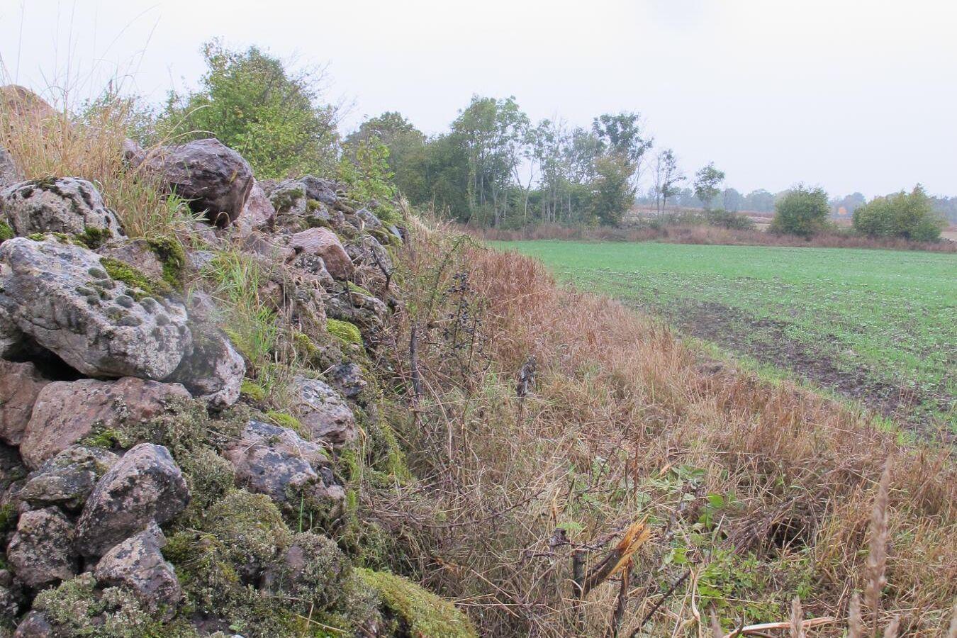 Stenmur på Öland.