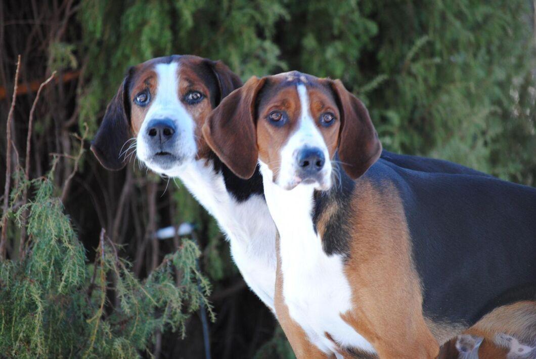 Medel mot fästingar ska nu säkerhetsgranskas efter larm från hundägare och andra.