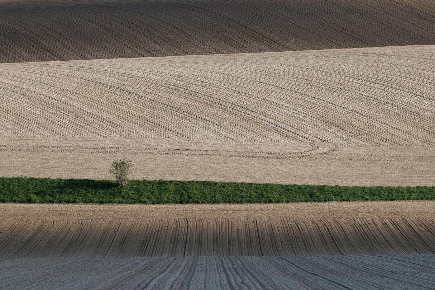 Nu har det franska parlamentet godkänt en lagändring som innebär att odlarna får dispens från . Arkivbild.