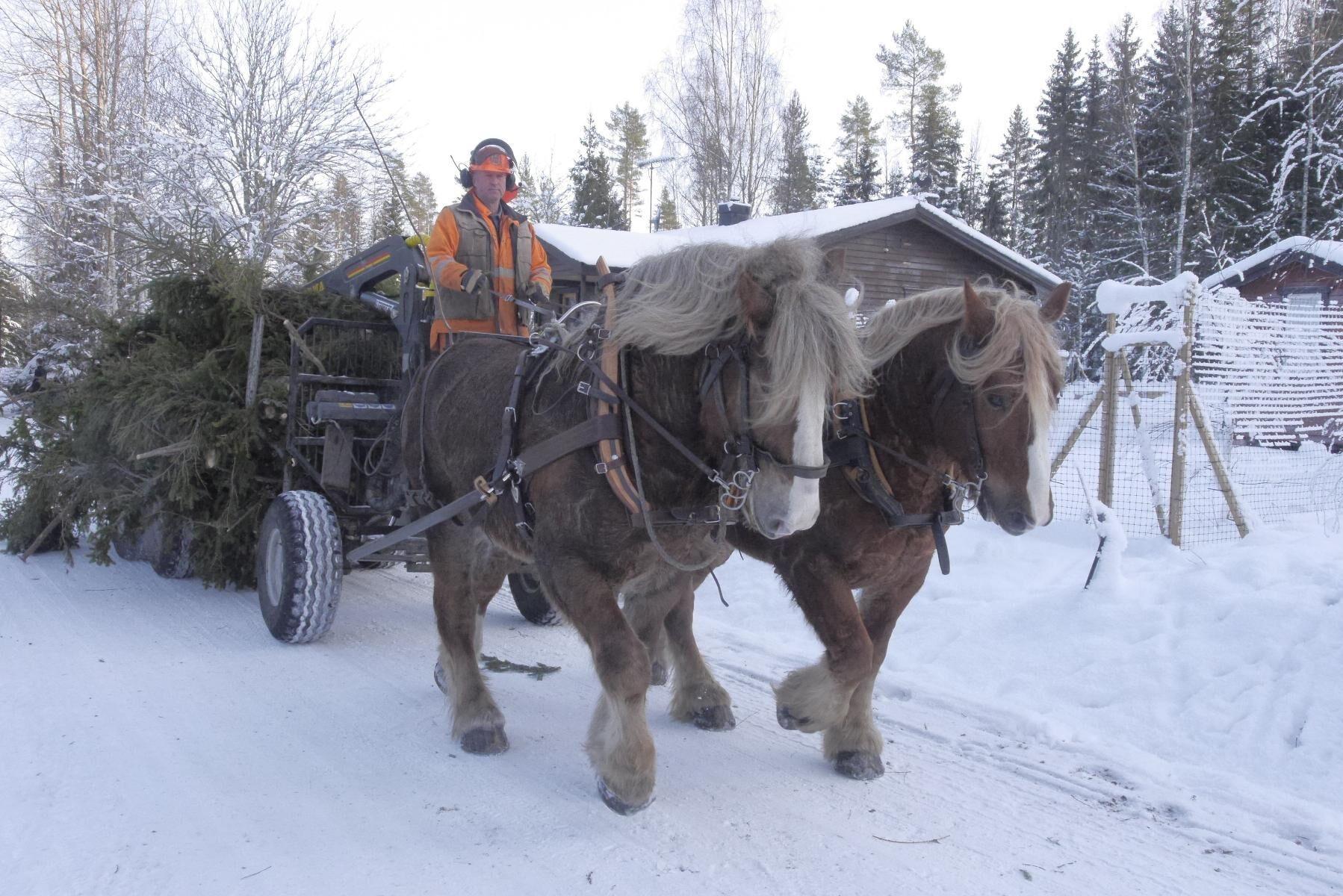 Johan Eriksson har arbetat för Hästens storskogsentreprenad i drygt 30 år.