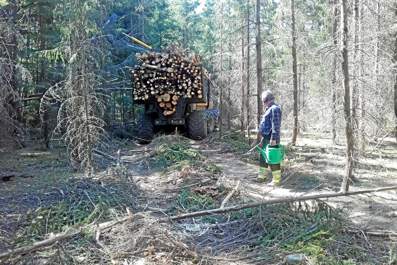 Brandvakt. Örjan Persson står beredd med kratta och vattenkanna för att snabbt kunna släcka eventuella bränder där skotaren kör fram för Mellanskog i Västmanland.