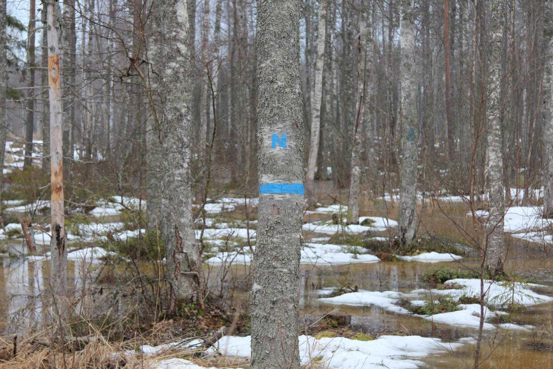 Om det var en högre andel naturvårdsavtal, och mindre reservat och biotopskydd, skulle statens kostnad för skydd av skog minska, resonerar Riksrevisionen.