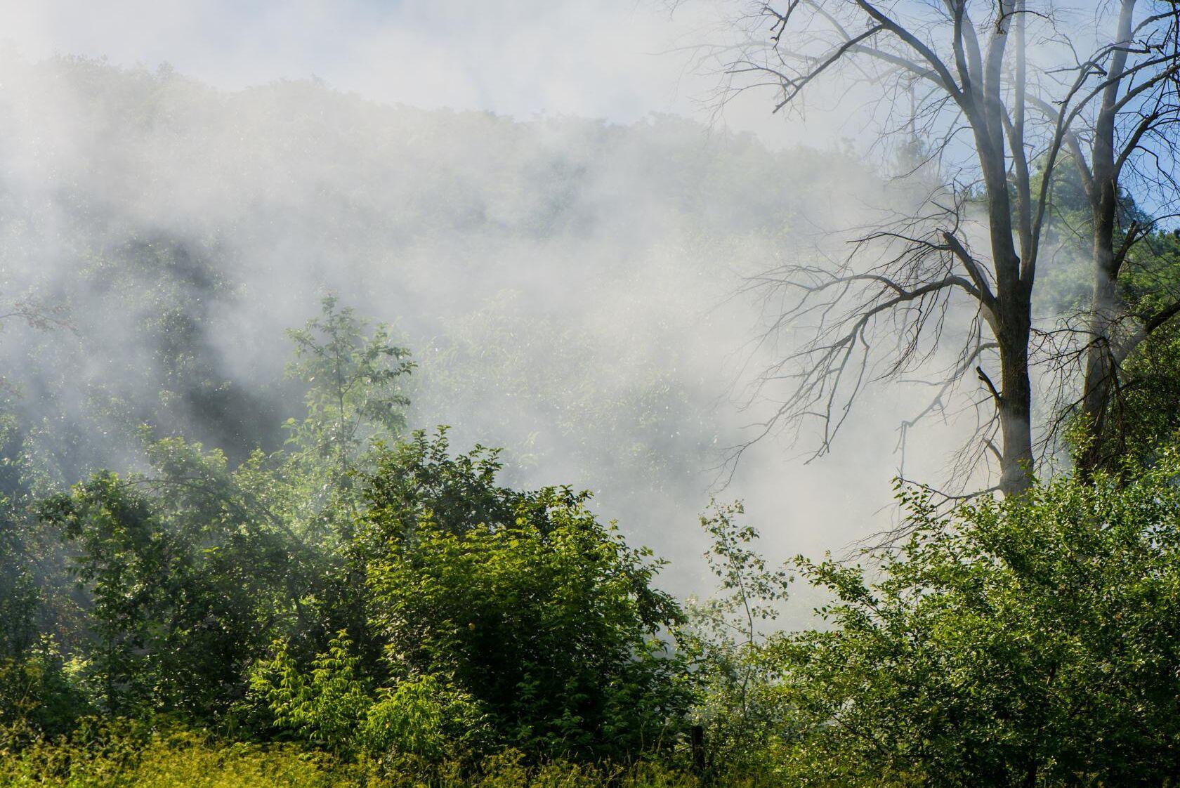 Risken för bränder i skog och mark är stor i delar av sydligaste Götaland, Öland, Gotland, samt delar av Svealand och Norrland. Arkivbild.