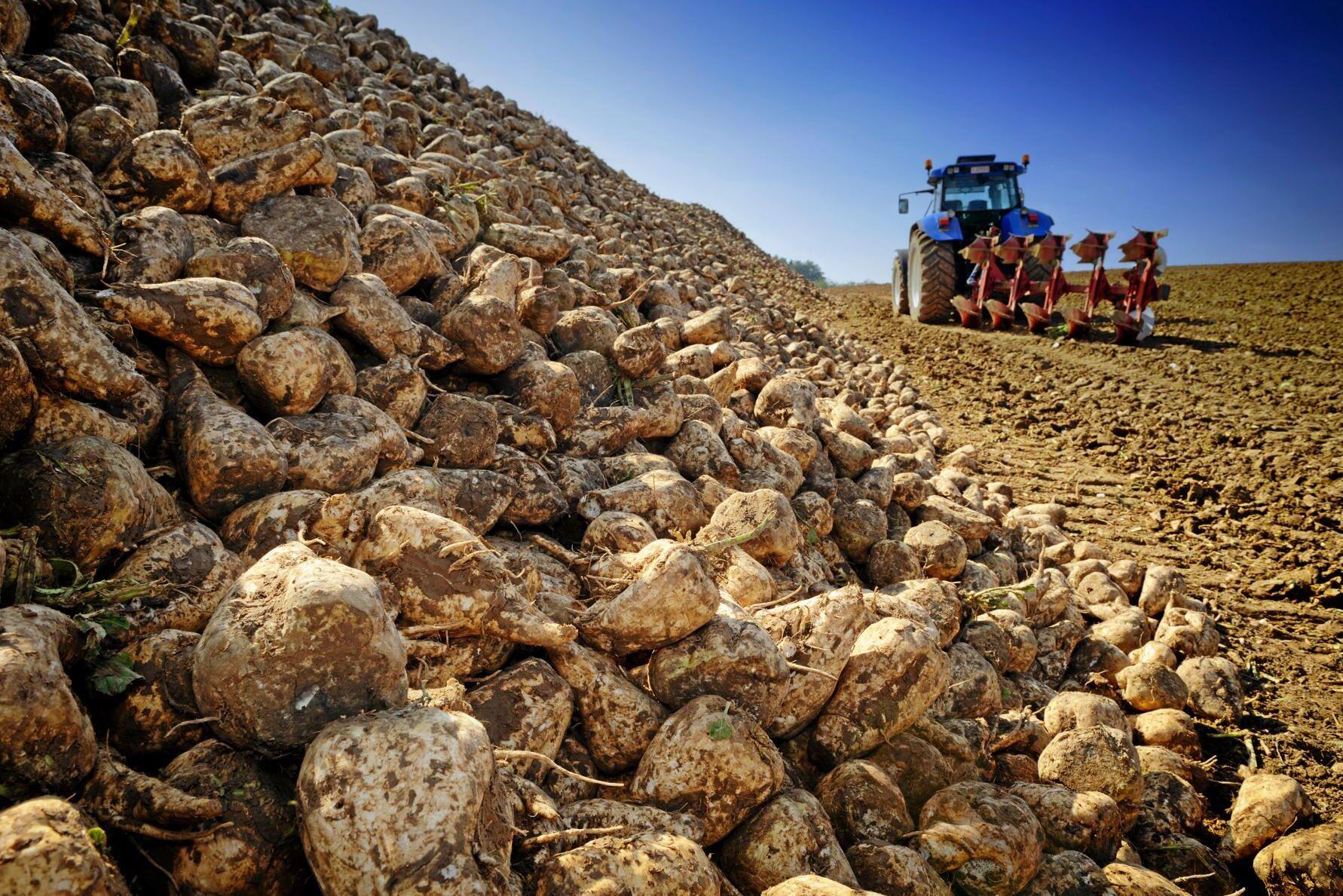 Betkampanjen riskerar att förlängas på grund av tekniska problem på sockerbruket i Örtofta, Skåne.