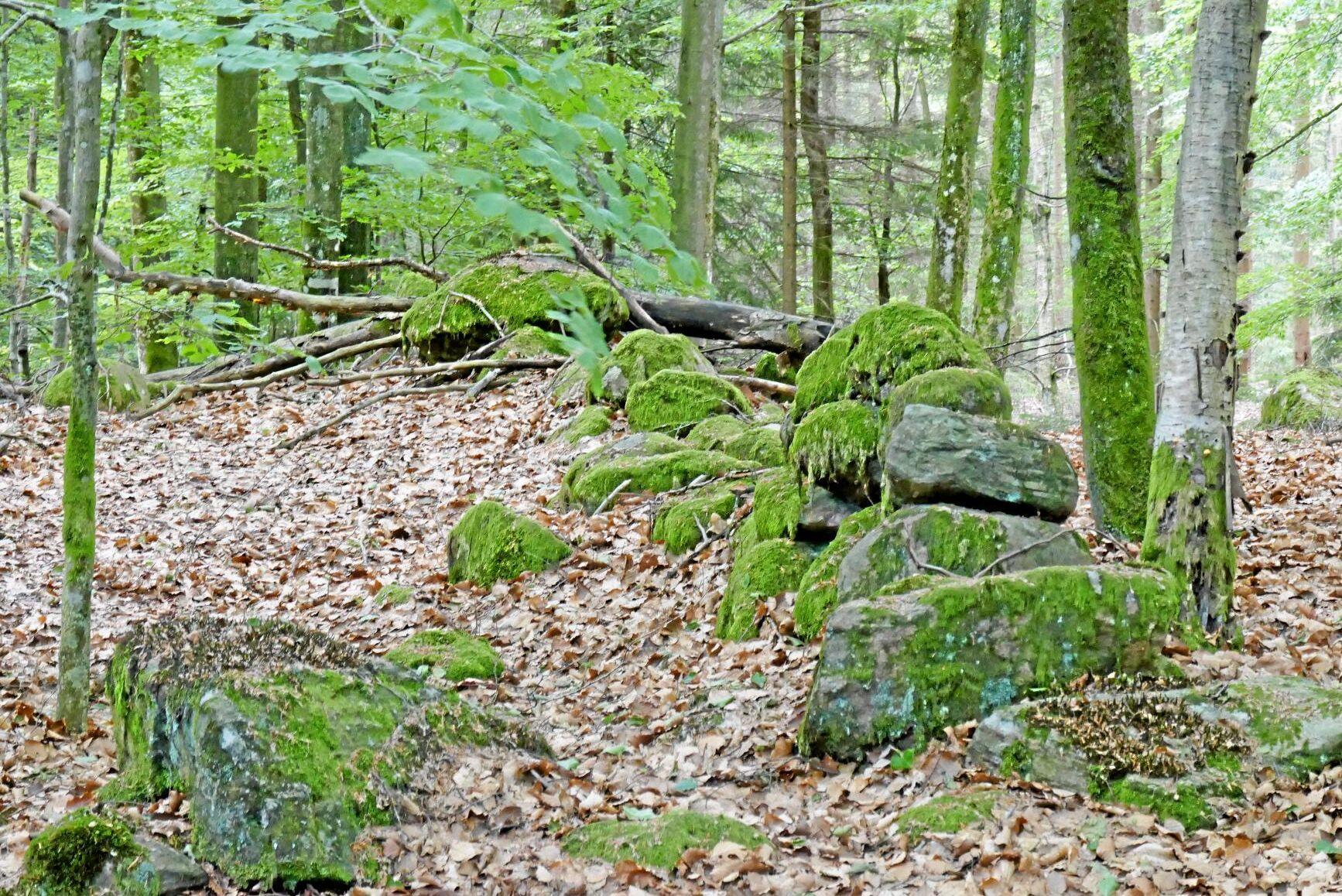 Spåren av äldre bebyggelse är vanlig i skogen.