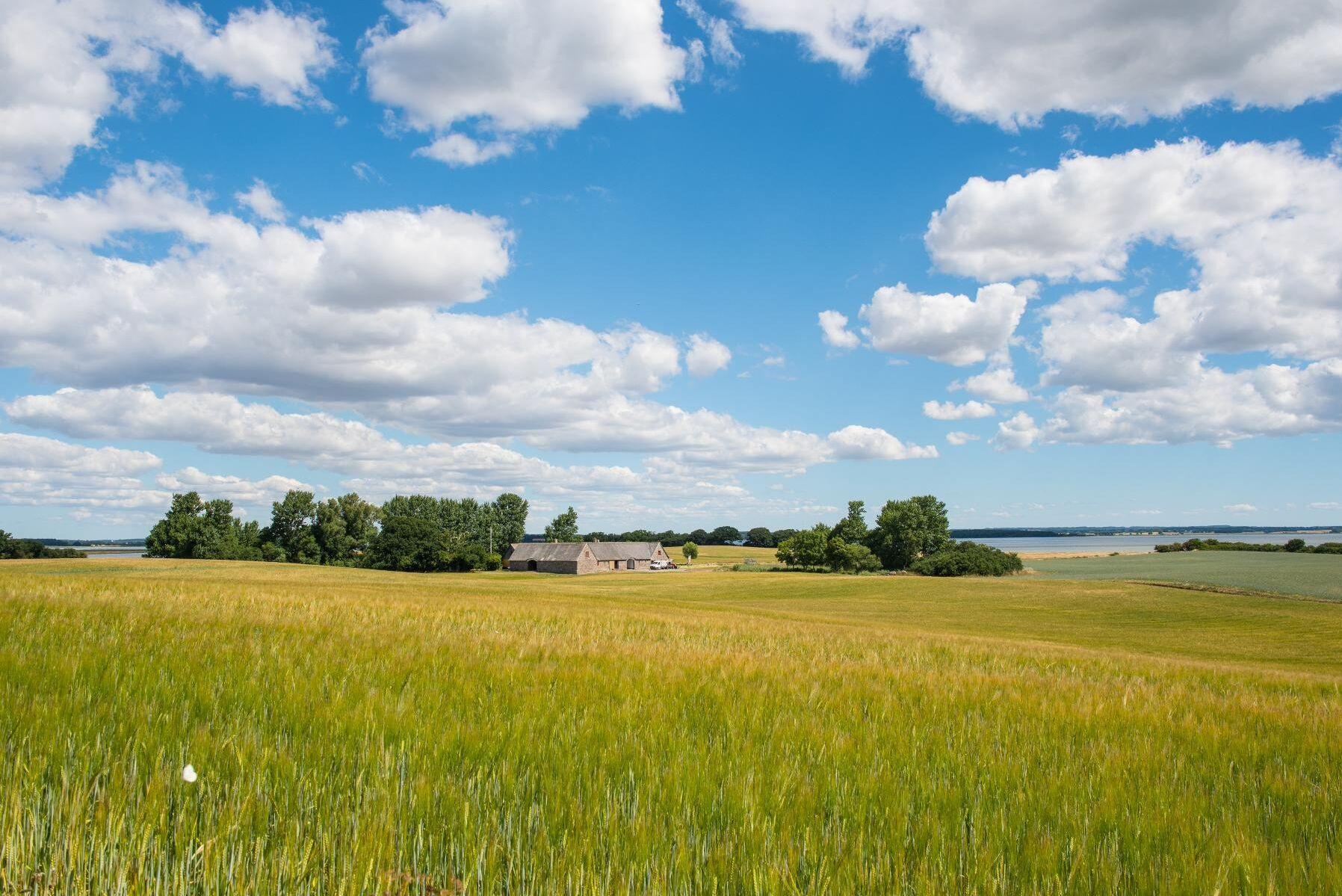 Med ett EU-stöd på 68 miljoner danska kronor ska 1945 hektar dansk jordbruksmark planteras igen med skog.