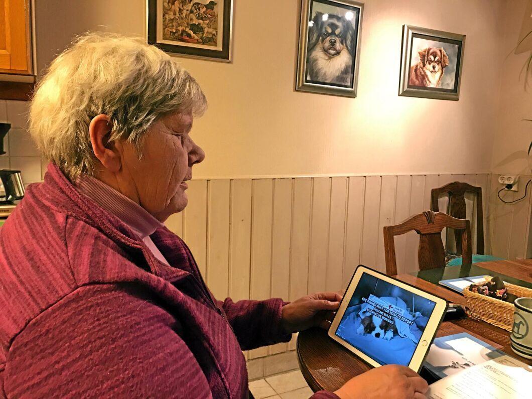 Ann Rode drabbades av att flera valpkullar innehöll missbildade valpar men till en början misstänkte hon inte att fästingmedlet kunde ha något med problemen att göra.