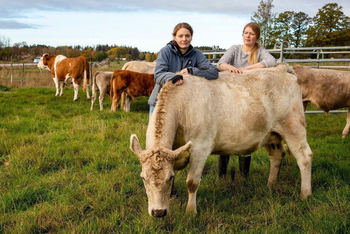 """I början av oktober dumpade någon slaktrester från bland annat ett får i en kohage vid Stenkvista lantbruk i Sörmland. """"Det är både upprörande och obehagligt. Det kan ju innehålla något smittsamt"""", säger Amanda Forss (till vänster)."""