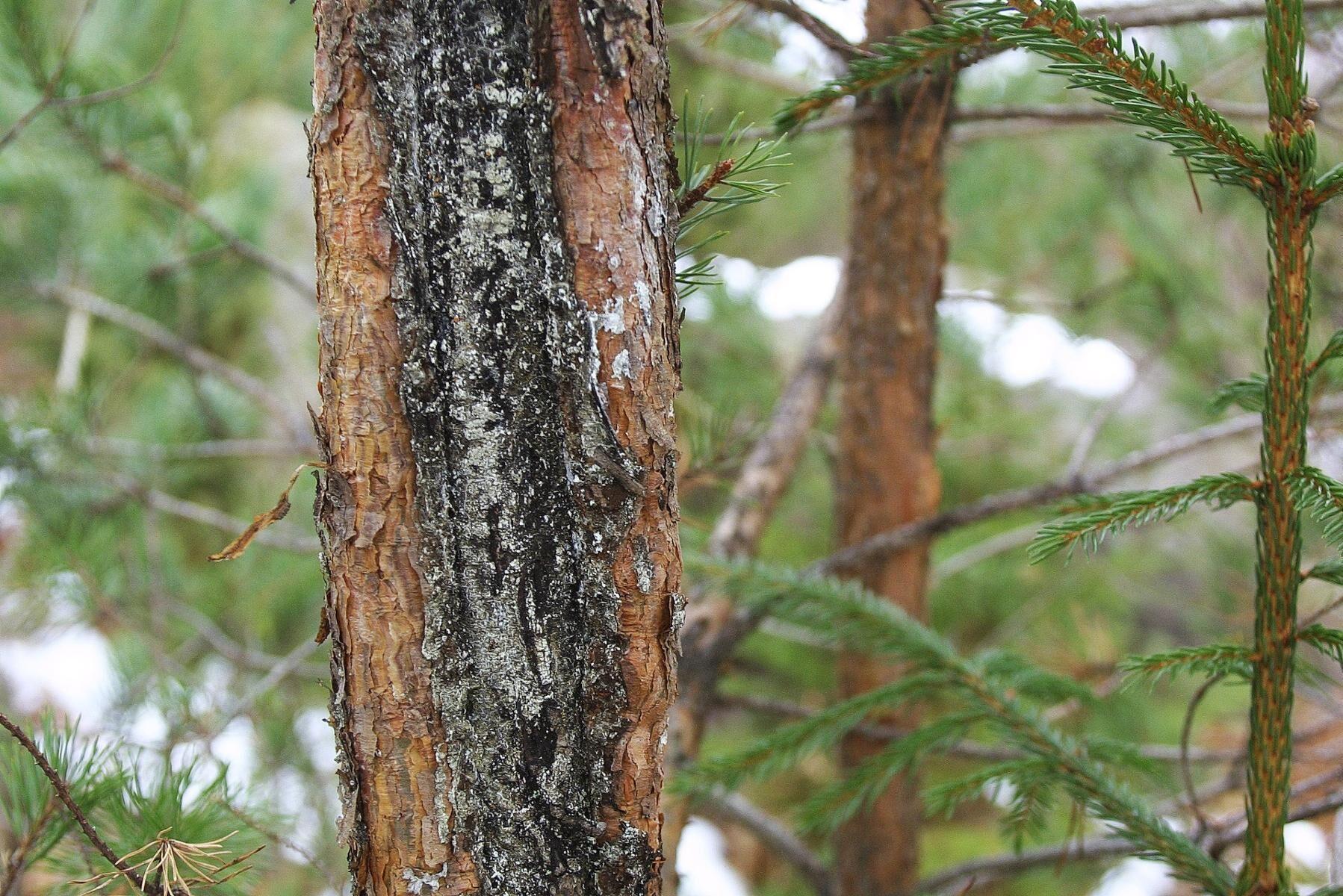 Betesskador över acceptabel nivå kostar skogsägarna 1,4 miljarder kronor per, enligt en ny rapport.