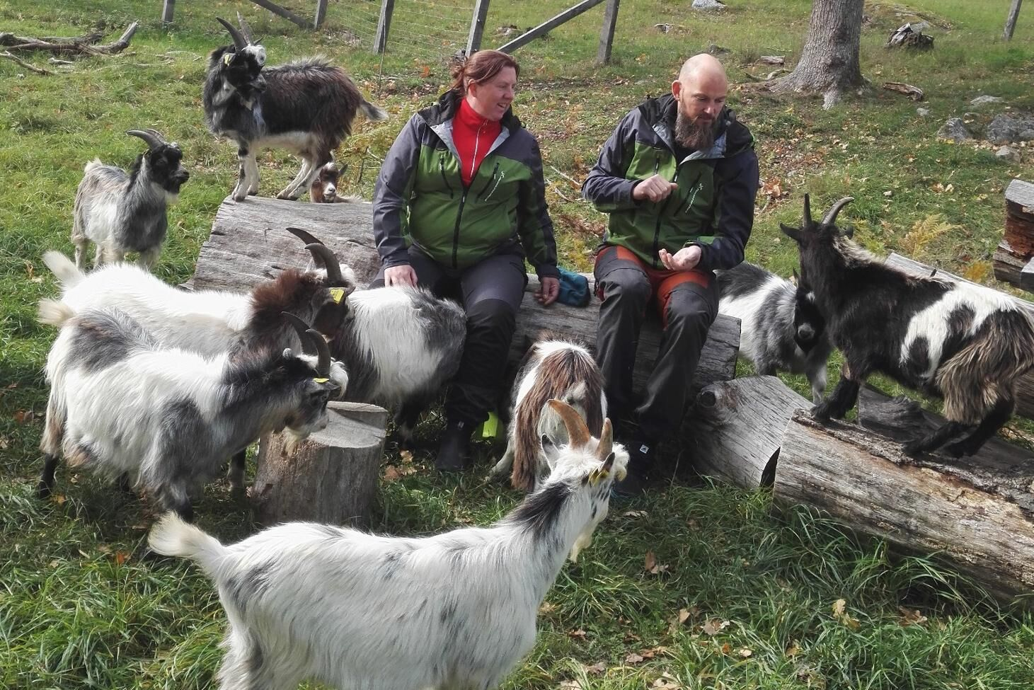 Anna Sundberg fick idén till Enöga Killing då hon gick en hållbarhetsutbildning för minskat matsvinn med praktiken förlagd till en getgård. Här tillsammans med Niklas Sundberg och några av företagets getter.