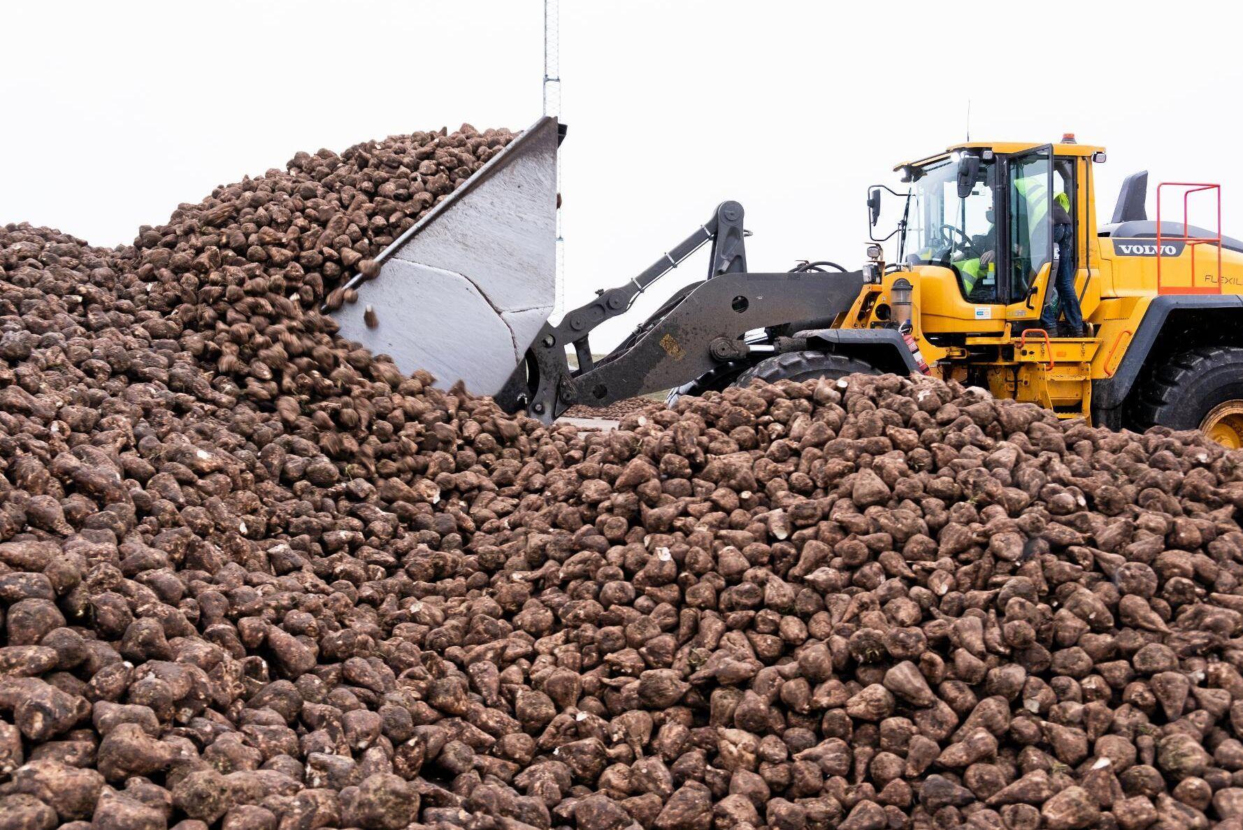 Betor lämnas av vid sockerbruket i Örtofta.