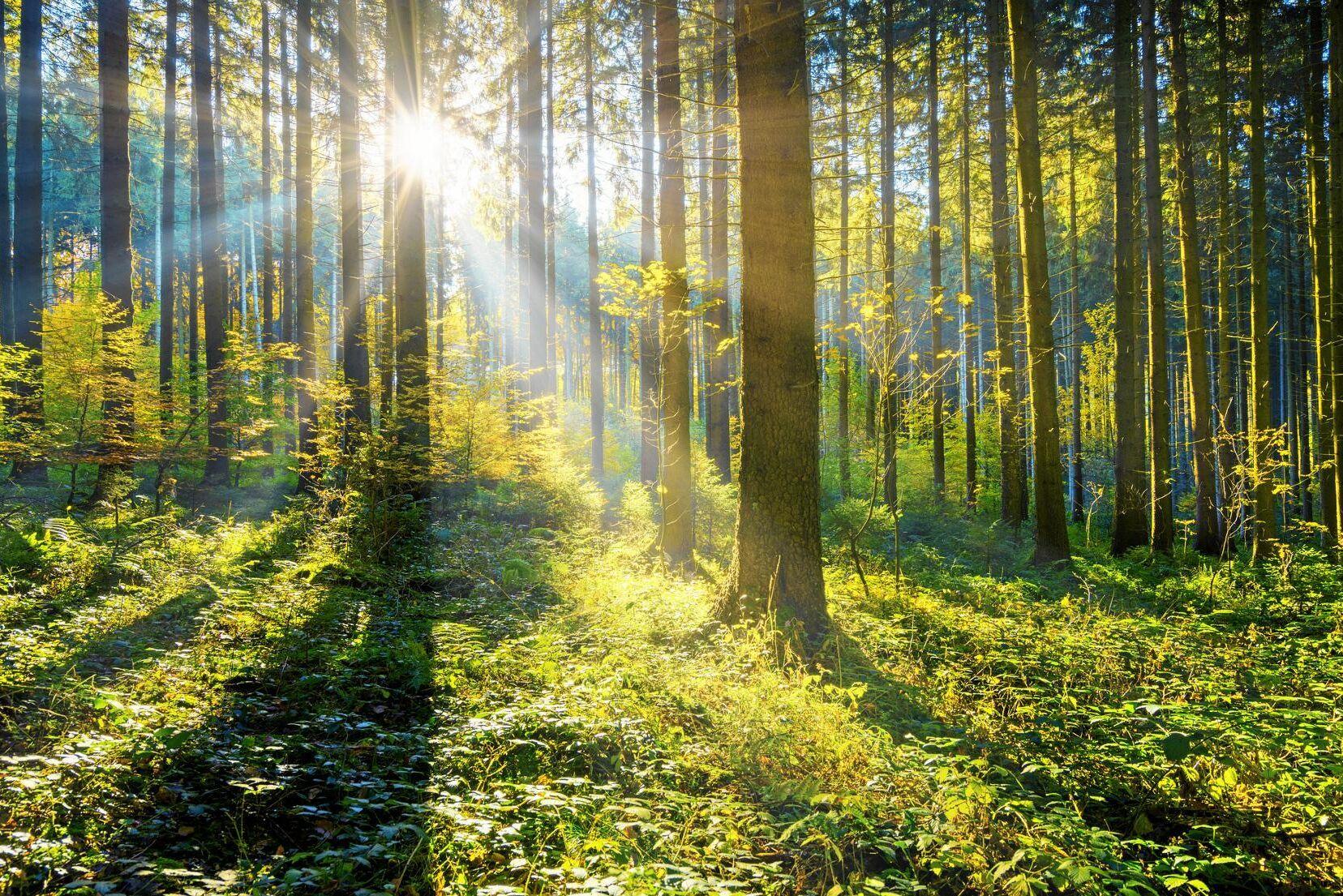 Rätten att plocka bär och svamp på annans mark är en del av den svenska folksjälen. Allemansrätten bör bevaras.