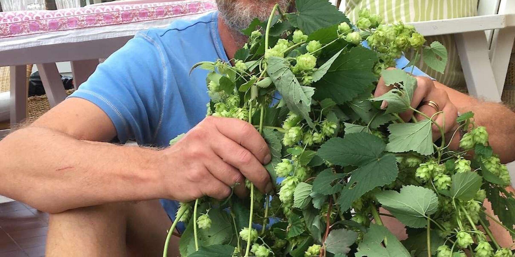 """Det är inte omöjligt att odla ekologisk humle i Sverige menar Jan Bärtås. """"Det besvärligaste är väl egentligen att allt måste rensas för hand."""""""