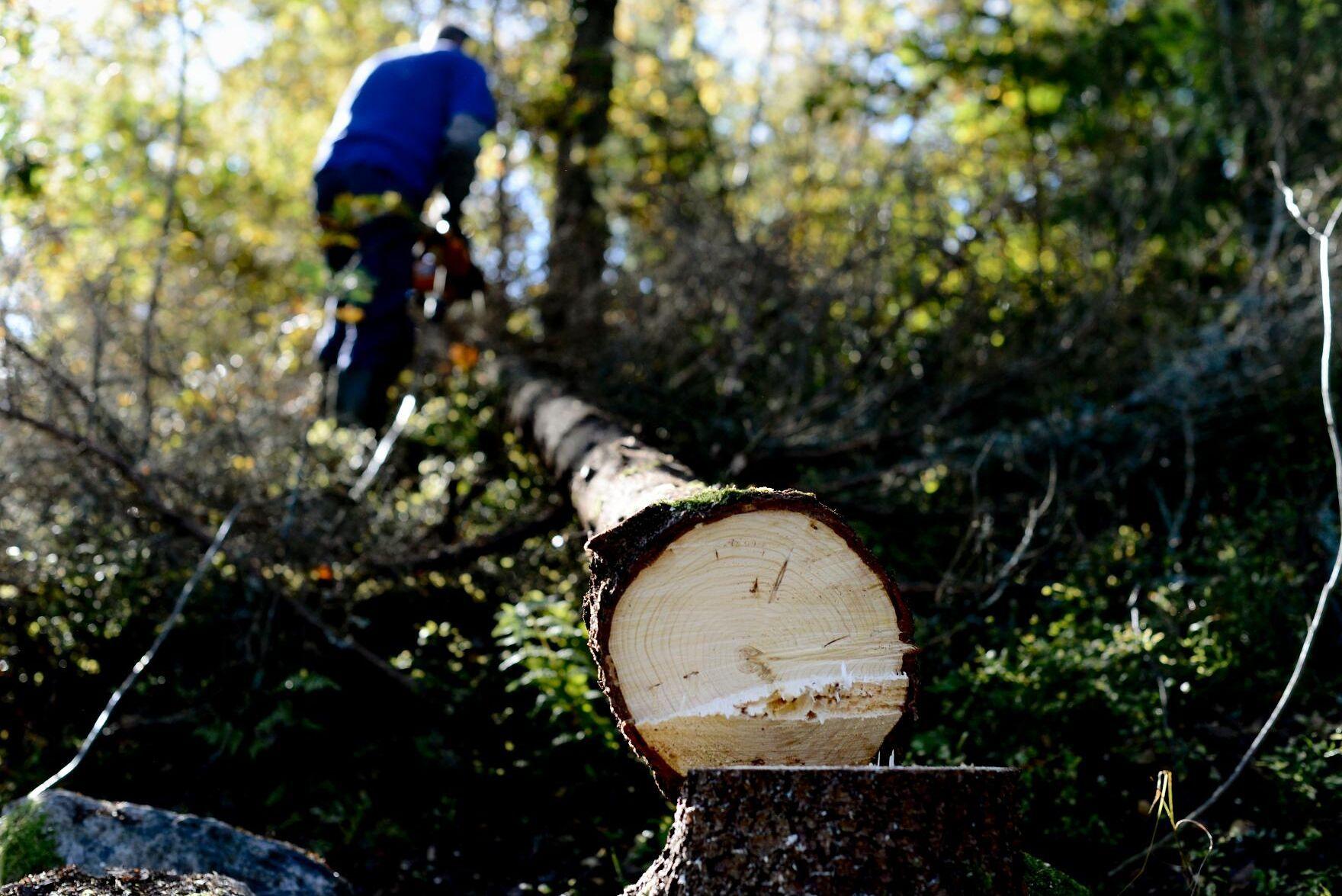 Skogsägare behöver få utökat skydd för sina rättigheter, skriver Timbros Benjamin Dousa och Ellen Gustafsson.