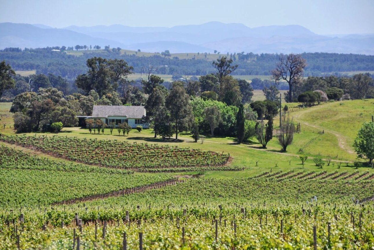 Australiens vingårdar är beroende av utländsk arbetskraft. Men landets gränser är stängda till följd av pandemin.