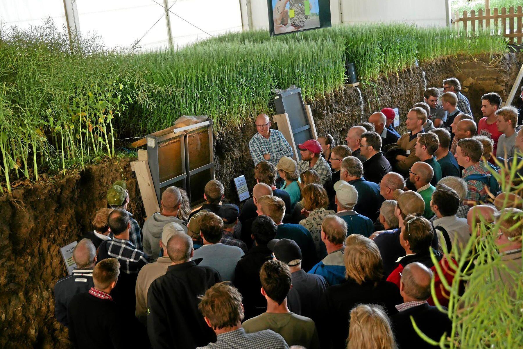 Gropen. Genomskärningarna som visade jordstrukturen vid olika typer av jordbearbetning rönte stort intresse på Borgeby.