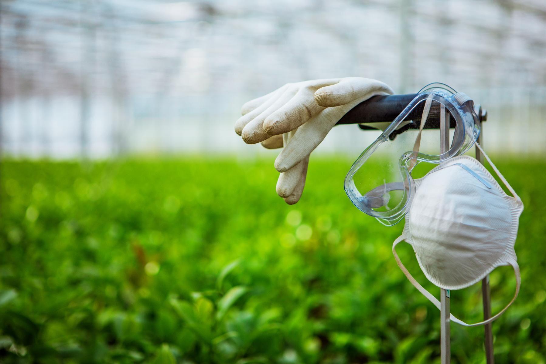 """I Danmark finns en brett sammansatt """"task force"""" för att motverka smittspridning på arbetsplatserna inom de gröna näringarna."""