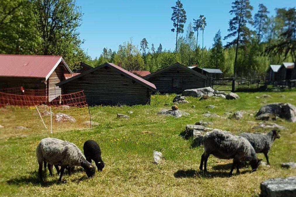 Karin Lysell Edgars fäbod ligger en mil norr om Dala-Floda i Leksands kommun. Där finns 22 får och 6 getter.