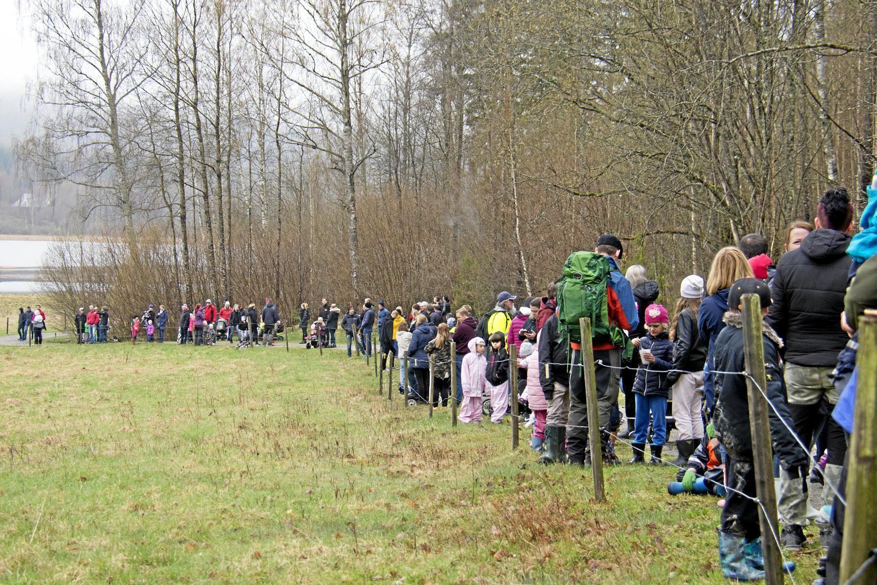 Inget besöksrekord men väl 200 besökare fanns på plats vid det årliga kosläppet på Bergs klätt.