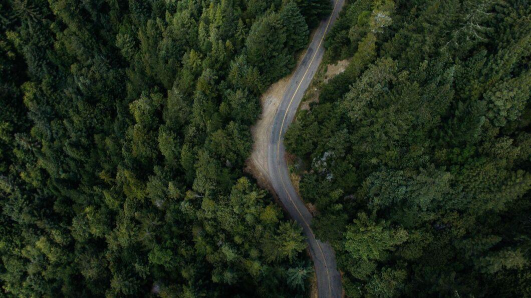 Metsä Group satsar stort på digital teknik i skogsbruket. Fotografier tagna med drönare och multispektralkameror används i ett nytt system för att upptäcka barkborrar i ett tidigt skede. Företaget arbetar också med att ta fram virtuella skogsbruksplaner.