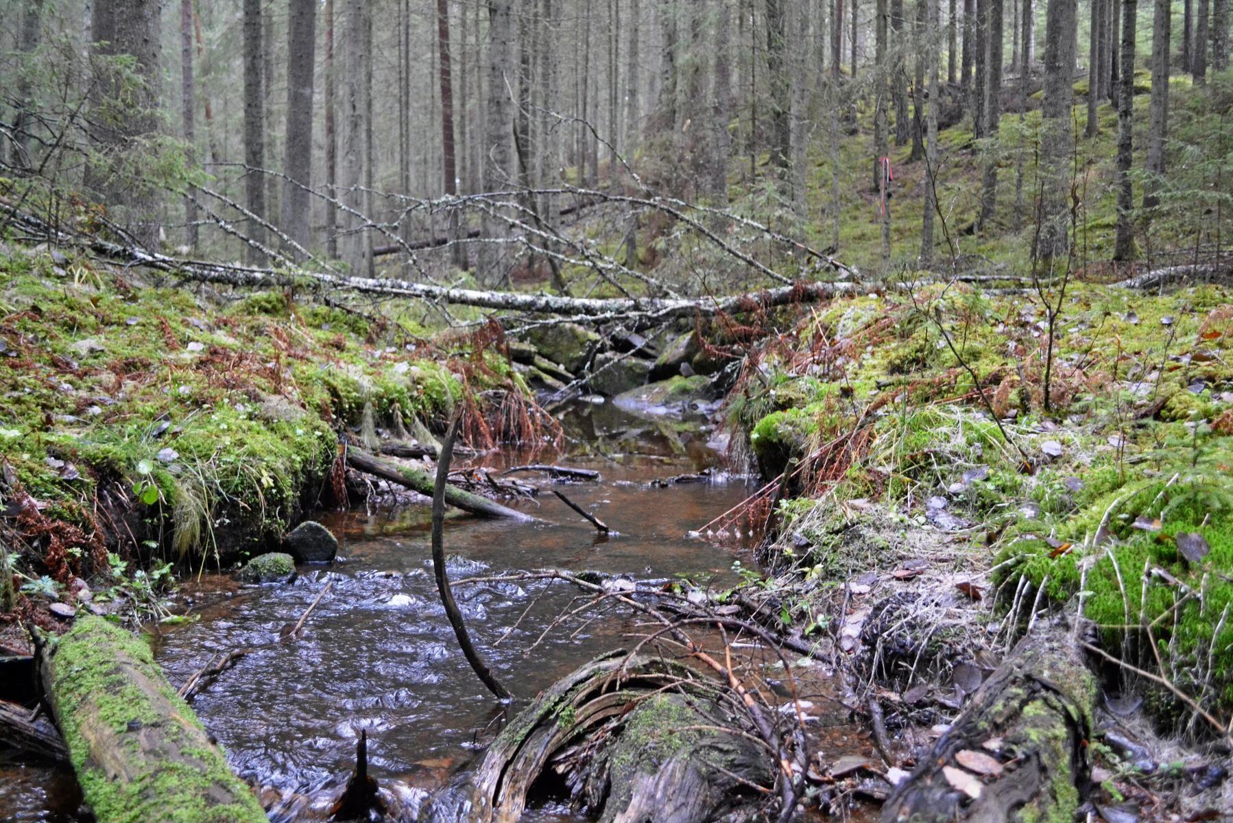 Granskog i Värmland. Arkivbild.