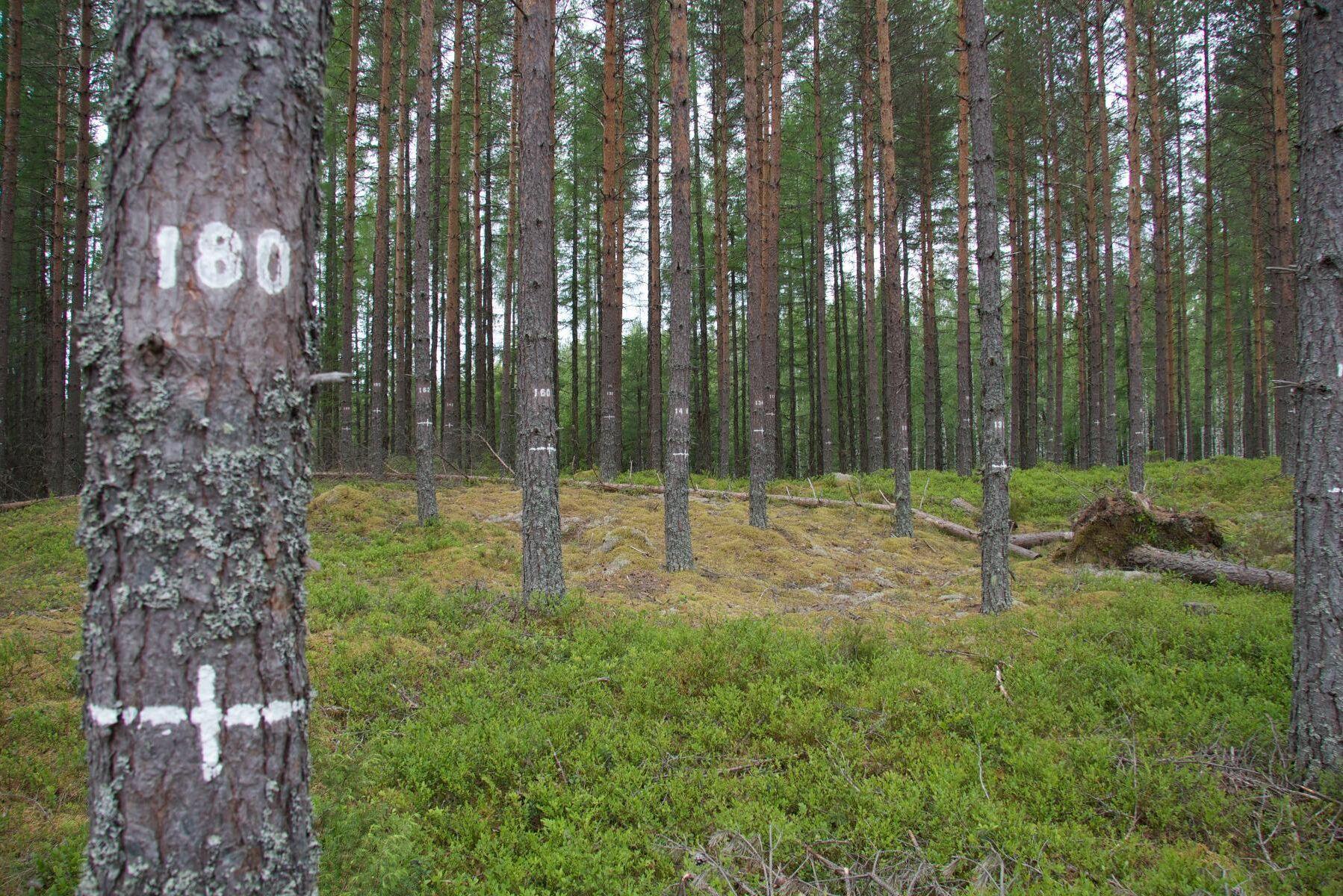 Skogssällskapets utlysning är öppen till och med den 21 oktober. Arkivbild.