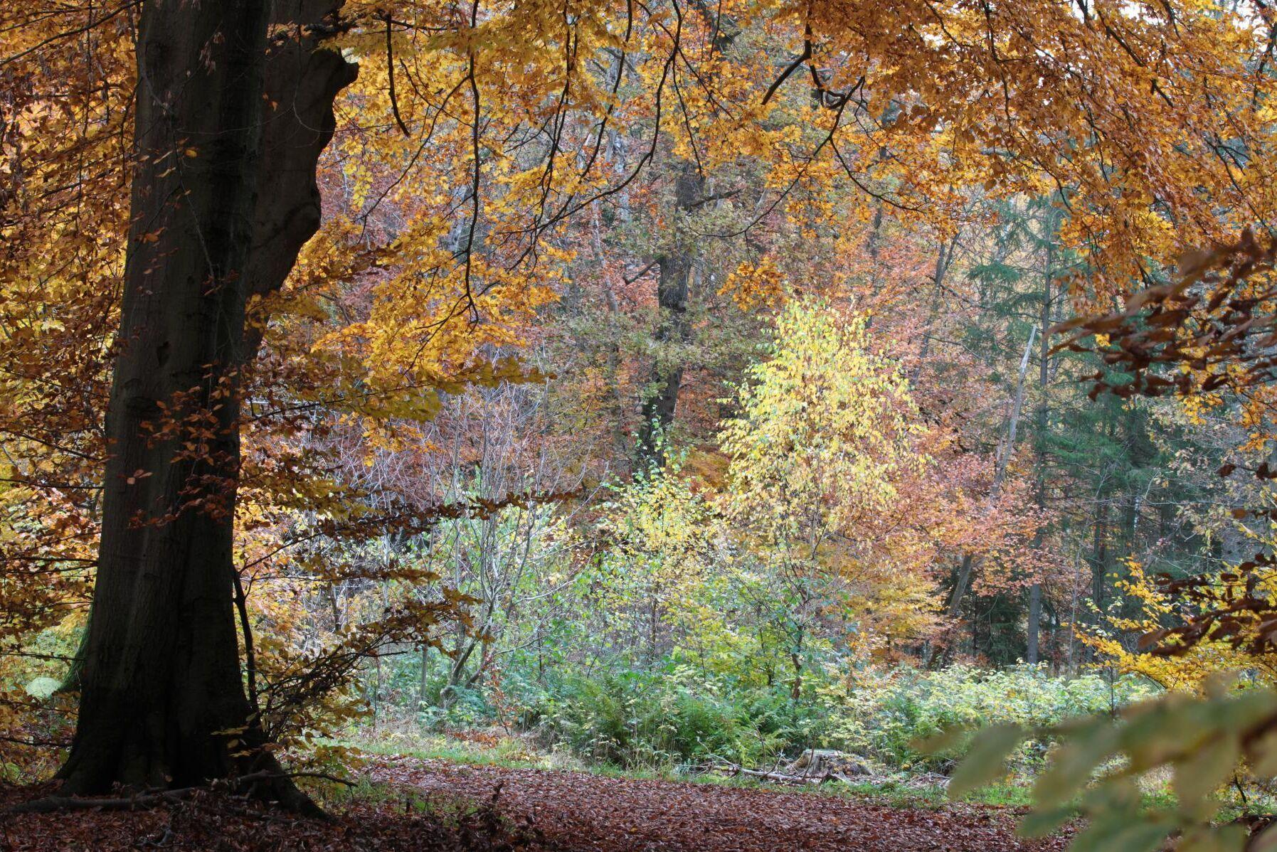 Danmark satsar 1,2 miljarder kronor på att avsätta orörd skog och förbättra för den biologiska mångfalden.