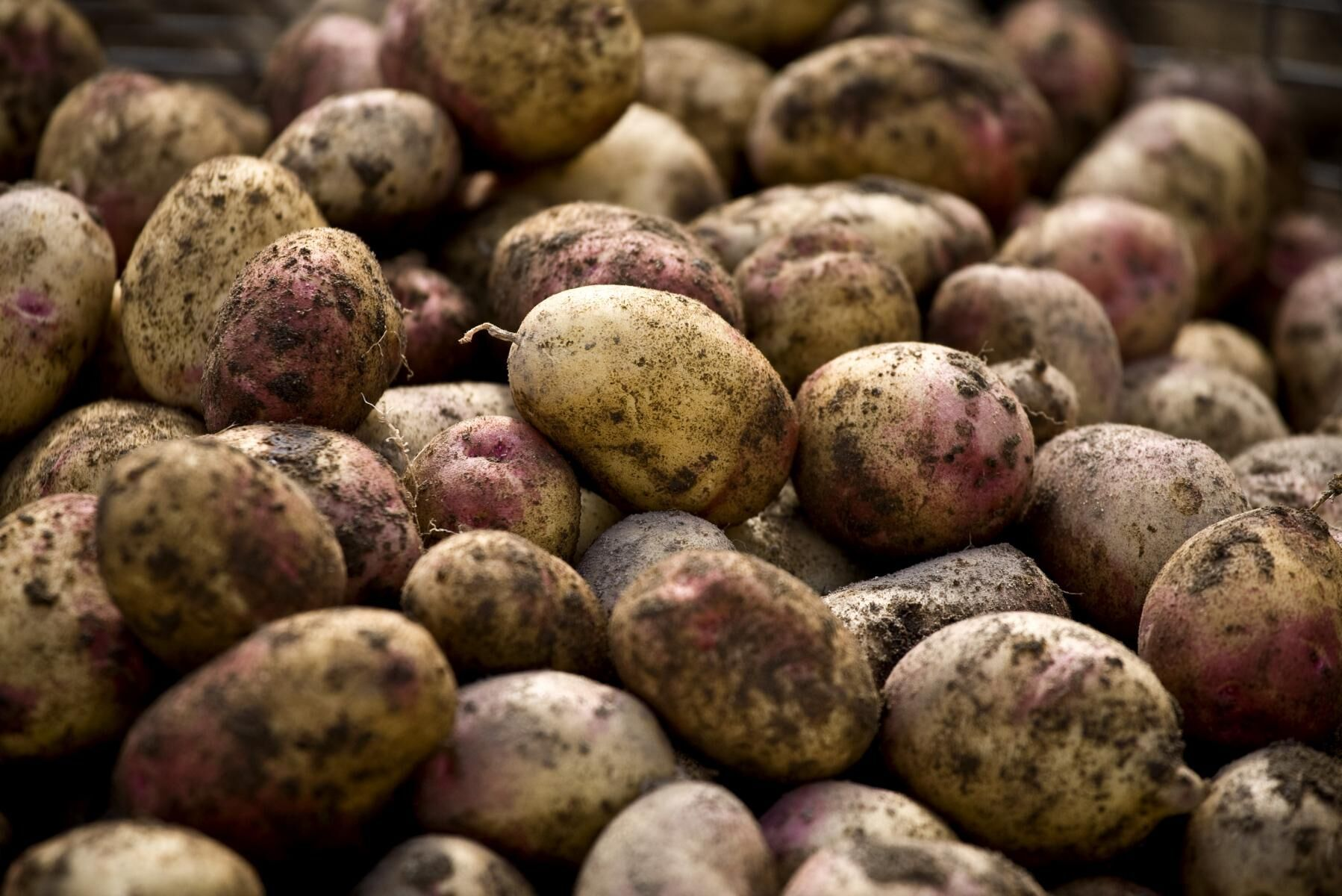 2019 var grönkålen mest populär enligt undersökningen, men i år verkar potatisen vara mer på folks läppar.