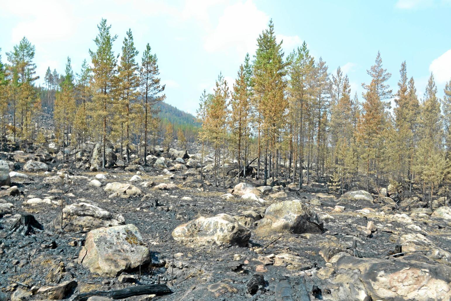 Bränd skogsmark i Ljusdal.
