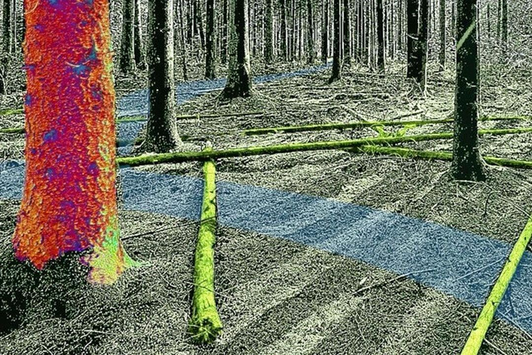 Skogforsk får ökad finansiering för de kommande fyra åren.