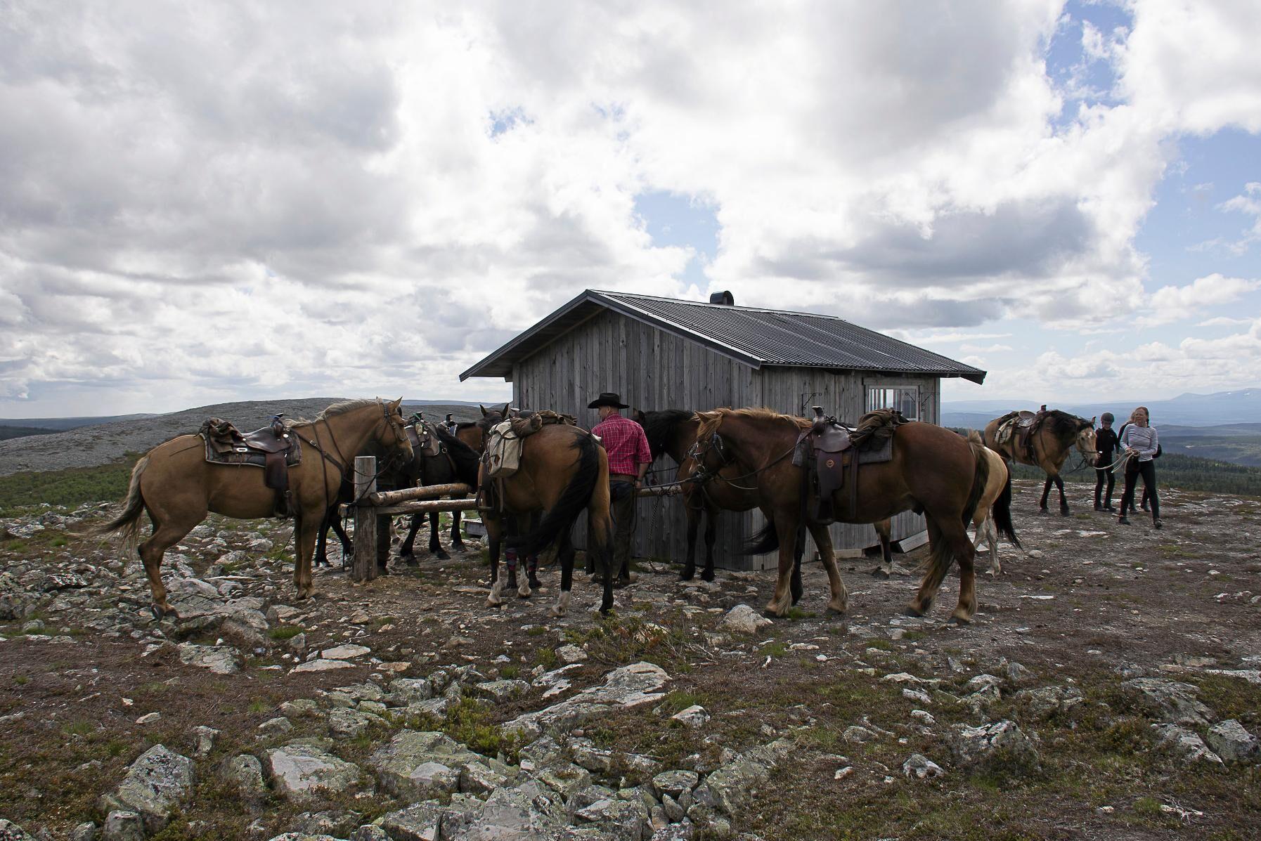 Framme vid Trumvallens jaktstuga får hästarna av raserna paint, quarter, appaloosa samt kall- och varmblodstravare vila medan deltagarna lagar lunch.