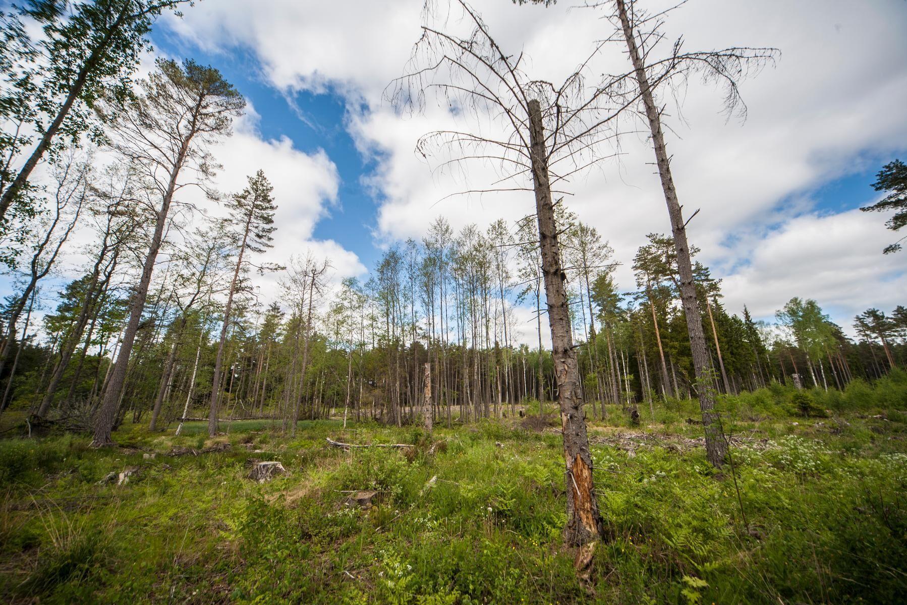 En fungerande äganderätt är en förutsättning för ett hållbart skogsägande och skogsbruk.