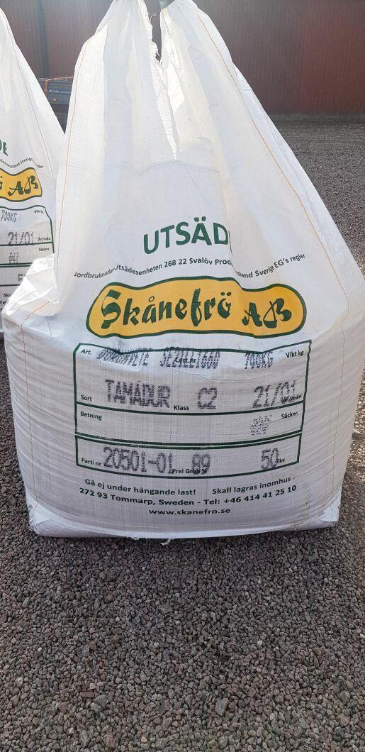 Durumvetesorten heter Tamadur och sås med 260 kilo per hektar.