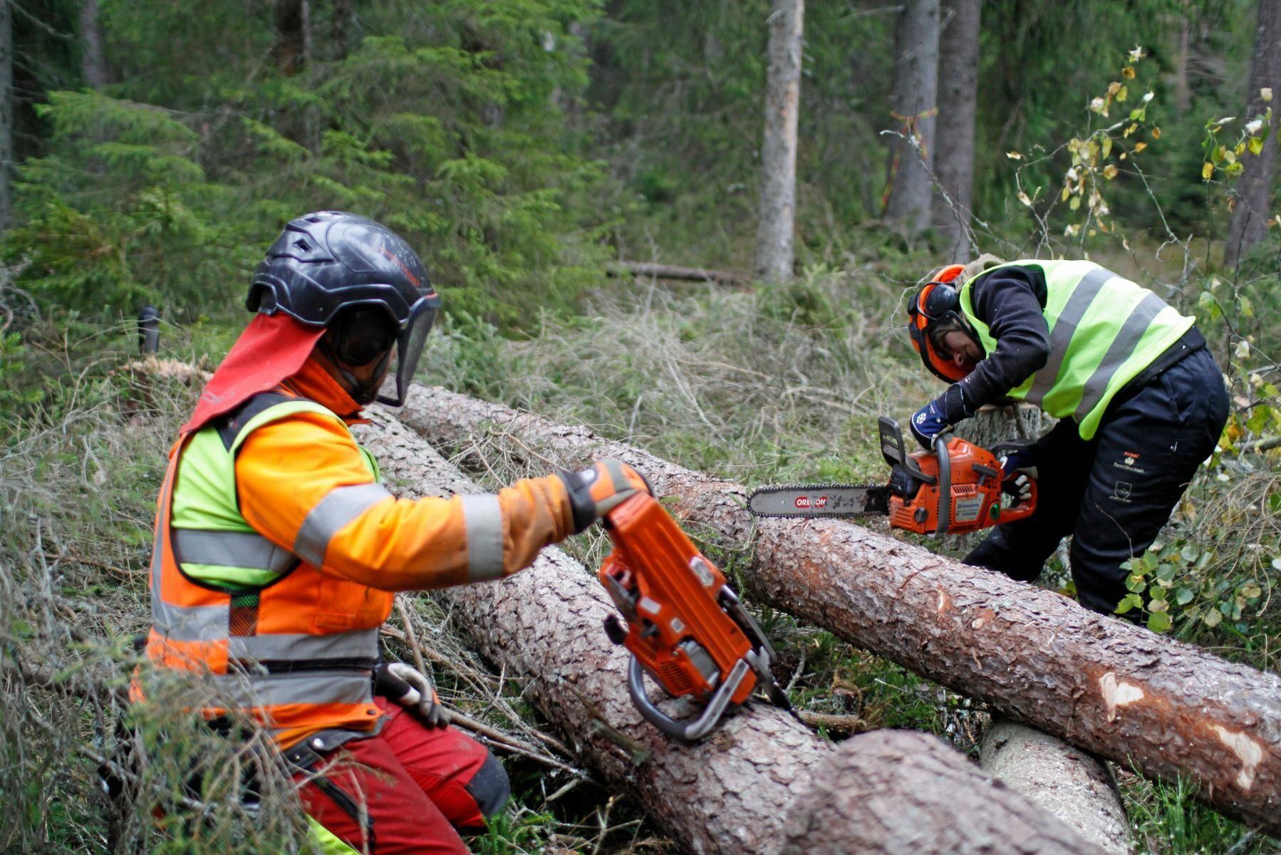 Andelen kvinnor som arbetar med skogsarbete inom det storskaliga skogsbruket har minskat, visar Skogsstyrelsens utvärdering.