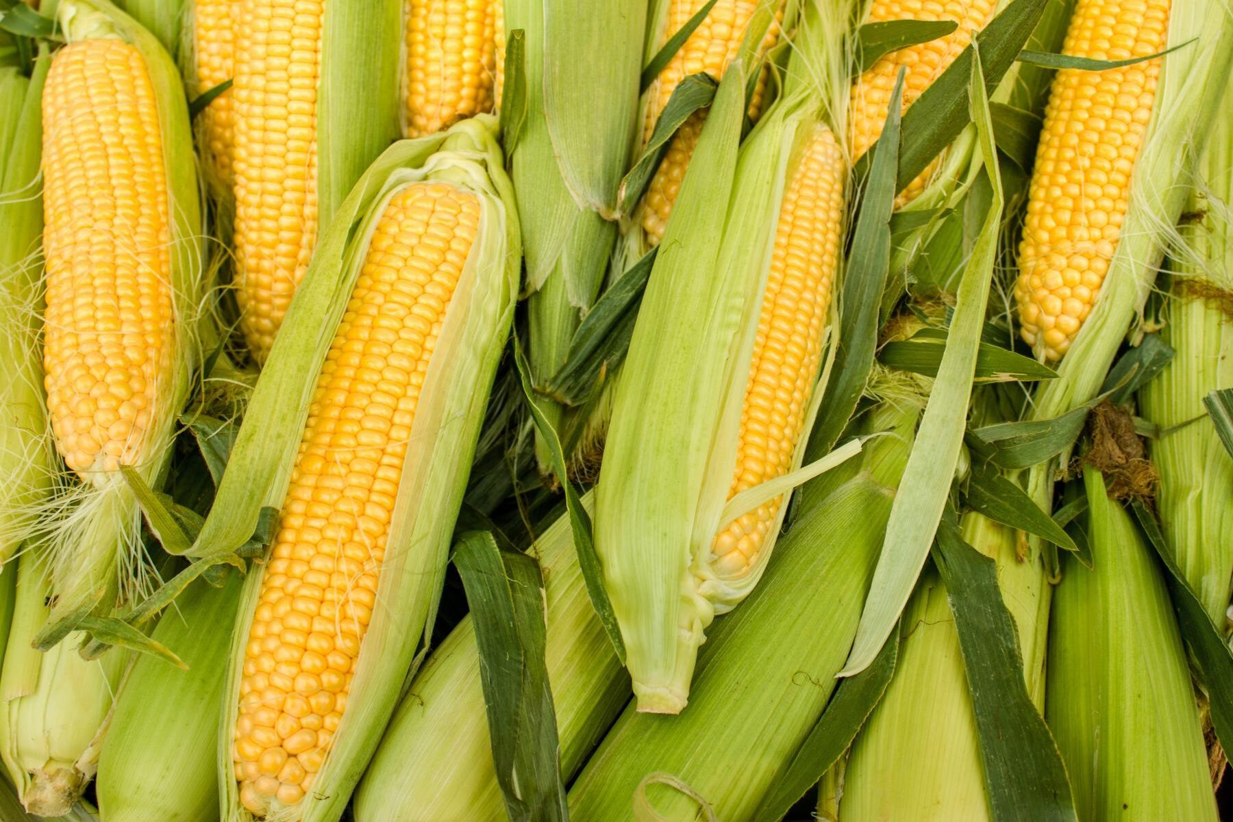 Enligt åtalet har runt 7 procent av all majs som sålts som ekologisk i USA omfattats av den nu avlidna mannens bedrägerier.