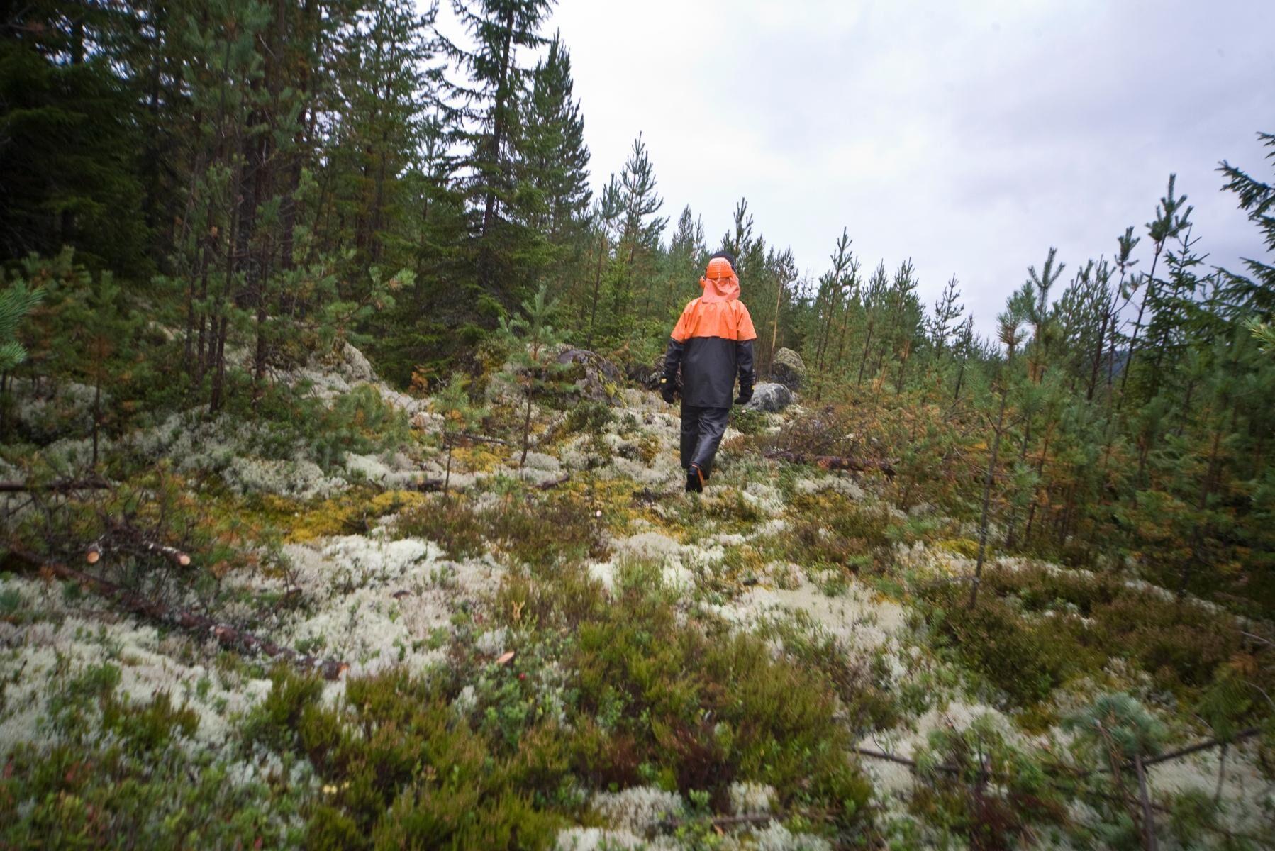 Hälften av alla skogsägare skulle investera i mer skog om de fick en miljon kronor, visar årets Skogsbarometer.