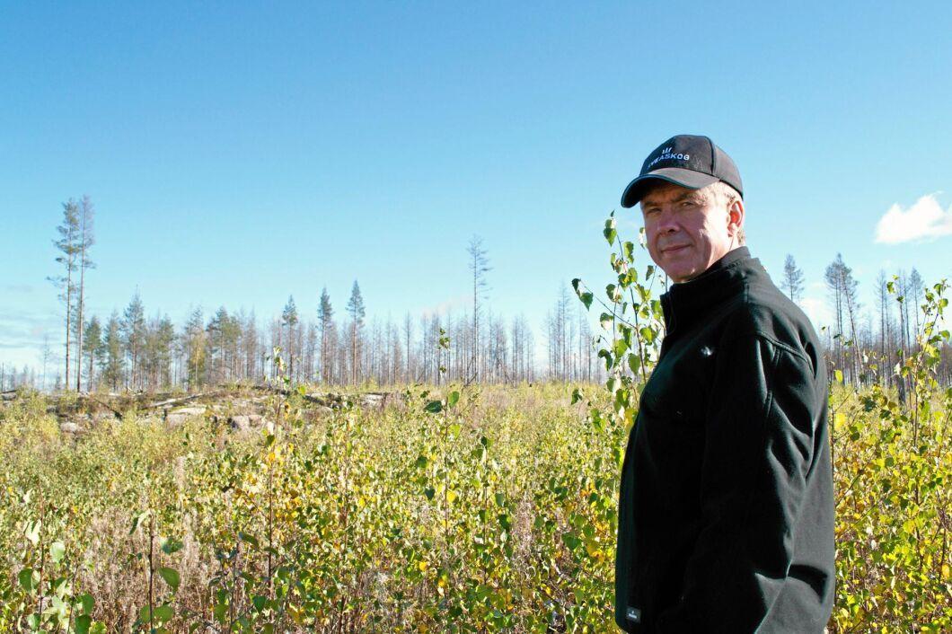 – Som mest är det en halv miljon björkplantor per hektar, men i snitt 60 000, berättar Stefan Toterud.