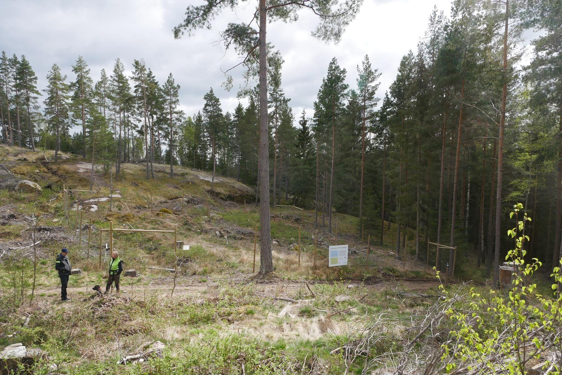 Jonas Edlund, till höger, inspekterar sin skog tillsammans med Tomas Andersson från Södra.