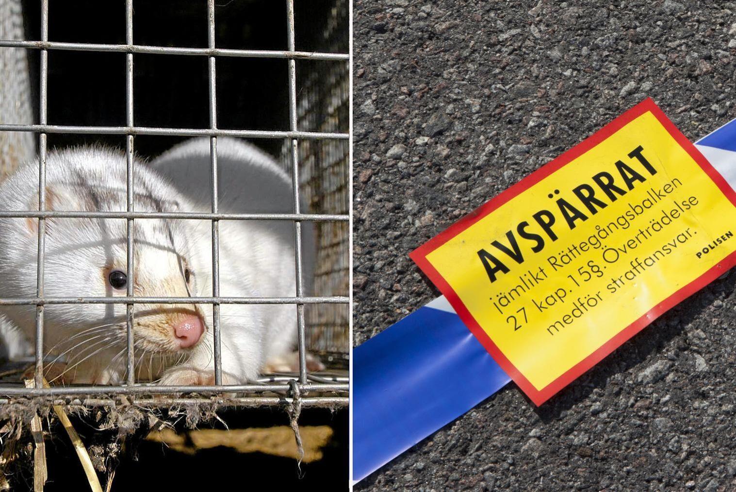 Djurrättsaktivisten åtalas för en rad olika brott efter att ha genomfört aktioner mot en minkfarm.