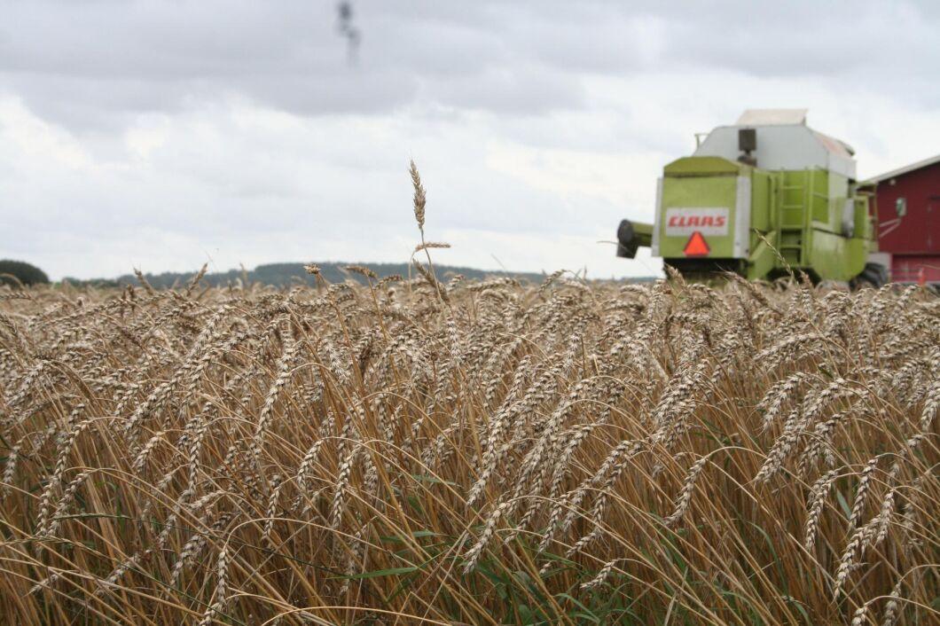 Om det blir brist på importerade drivmedel hotas hela livsmedelskedjan, framhåller Lantmännen och LRF i sin rapport.