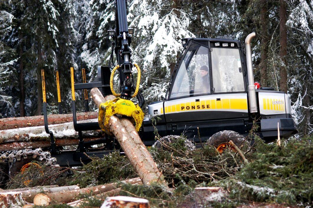 Arkivbild. Finska staten vill att skogsägare utan ersättning ska avsätta skog för skydd.