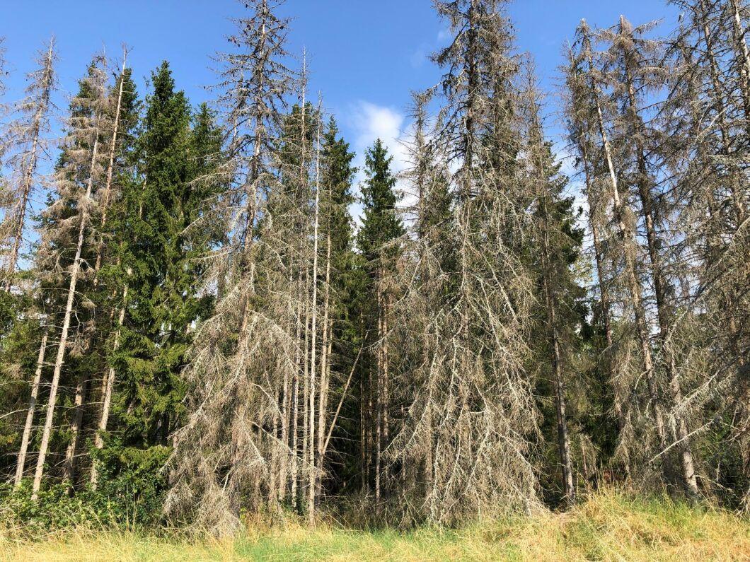 Regeringen tillåter skyddsåtgärder mot granbarkborre i 168 av Stockholms naturreservat för att undvika skador på bevarandevärdena.